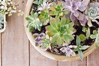 Pot-of-Colorful-Succulents